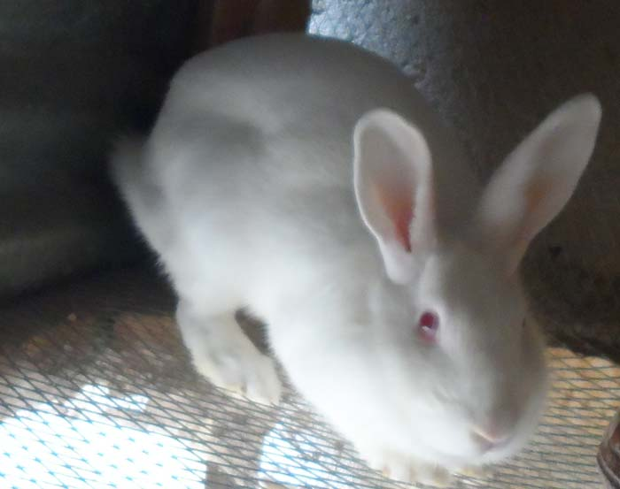 Best Practices to employ when Feeding Your Rabbits for Maximum Profits